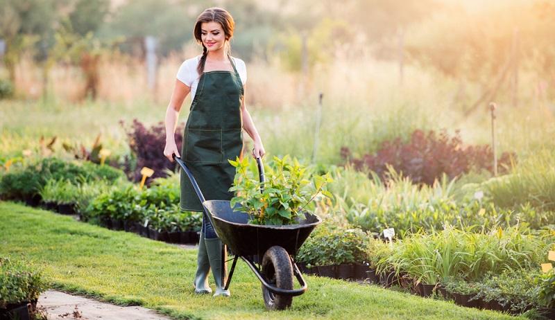 Der Name sagt schon alles, das Bild ebenso: Eine Karre zum Schieben braucht jeder für die Gartenarbeit, egal, ob Profi oder nicht.  ( Foto: Shutterstock-Halfpoint )