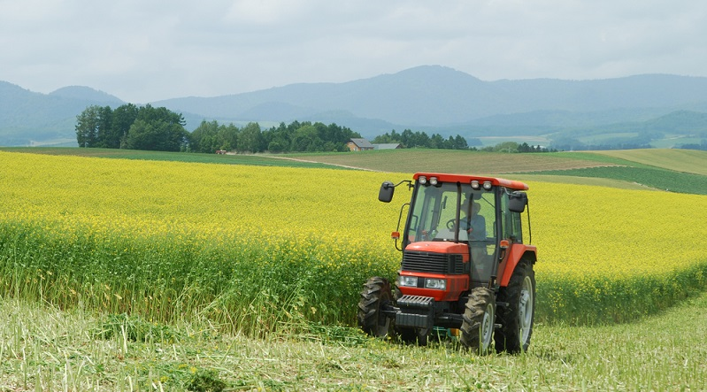 Die Fläche, die über Gründüngung nährstoffreicher werden soll, wird mit den Gründüngungspflanzen bebaut.  ( Foto: Shutterstock-Johnathan21)